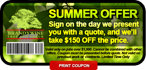 2018 Summer Coupon $150 OFF