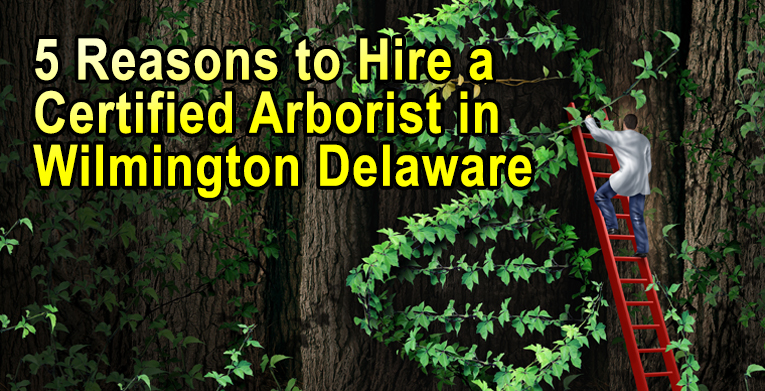 5 Reasons to Hire a Certified Arborist in Wilmington Delaware