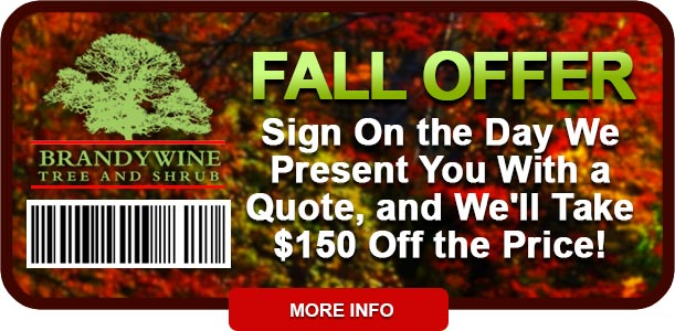Fall Coupon 2016