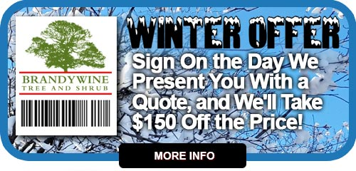 2017 Wilmington Delaware Winter Coupon