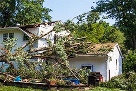 Tree Removal Emergency Services