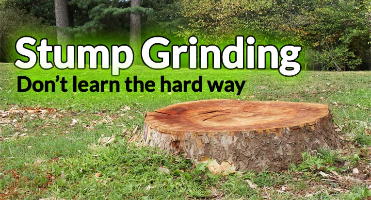 Wilmington Delaware Stump Grinding: Leave It To the Pros