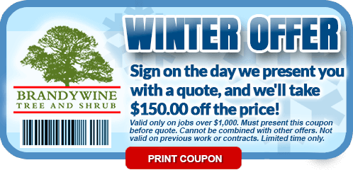 2018 Winter Coupon